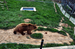 BEAR SANCTUARY near Prishtina for all of Kosovo's privately kept brown bears. For many years, there was no law against keeping brown bears in Kosovo. All Stock Photography