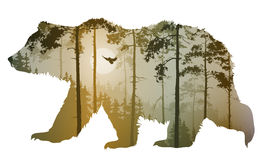 Bear. Silhouette of a bear. Inside a pine forest with a flying owl. Vector illustration, isolated object vector illustration