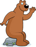 Bear Sitting Royalty Free Stock Photography