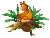 A bear sitting on a stump with leaves Stock Images