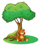 A bear sitting under a big tree Royalty Free Stock Photo