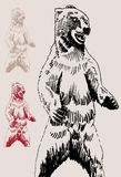 Bear Sketch royalty free stock image