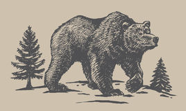 Bear sketch vector Royalty Free Stock Image