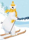 Bear skier. Vector illustration of cute shaggy polar bear skiing Royalty Free Stock Photography
