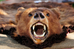 Bear skin Royalty Free Stock Image