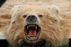 Bear Skin Rug. Stock Images