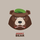 Bear soldier in a green beret. Angry animal Royalty Free Stock Photos