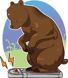 Bear stepping on scale and weighing itself Royalty Free Stock Photo