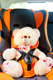 Bear strapped in a child seat in the car Royalty Free Stock Image