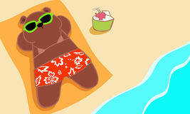 Bear sunbathing on the beach Royalty Free Stock Photo
