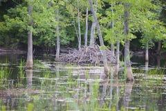 Bear Swamp royalty free stock photo