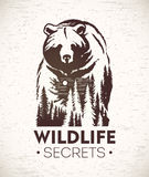 Bear and symbol wildlife. Stock Photography