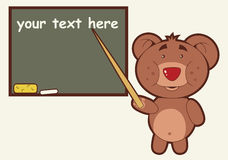 Bear Teacher Stock Images
