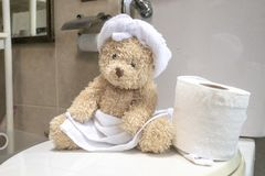 Bear is in toilet. Bear is sitting in toilet stock images