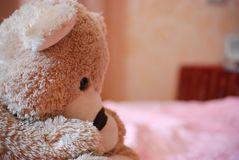 Bear toy Stock Images