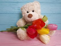 bear toy flower tulip wooden background royalty free stock photos