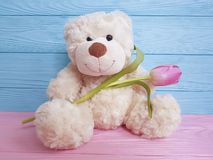 Bear toy flower tulip present wooden background decoration royalty free stock photos