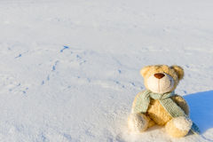 Bear toy in snow Stock Image