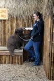 Bear and trainer feeding Stock Photos