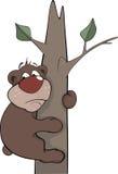 Bear on a tree. Cartoon Royalty Free Stock Photography