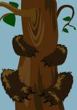 Bear on the tree Royalty Free Stock Photo
