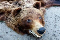 Bear trophy. Brown beat trophy from Transylvania Stock Photos