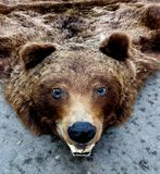 Bear trophy Stock Images