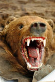 Bear trophy Royalty Free Stock Photography