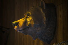 Bear trophy. Closeup view of a stuffed brown bear animal head Royalty Free Stock Photography