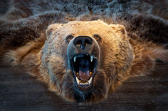 Bear trophy Royalty Free Stock Image