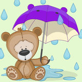 Bear with umbrella Stock Images