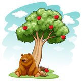 Bear under the tree Royalty Free Stock Image