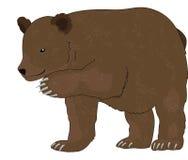 Bear or Ursus arctos, illustration Royalty Free Stock Photo