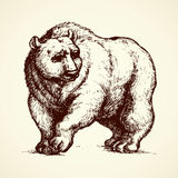Bear. Vector drawing Stock Photos