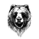 bear vector icon vector Stock Image
