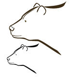Bear. Vector illustration : Bear sketch on a white background royalty free illustration