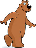 Bear Walking Stock Image