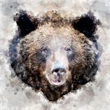 Bear - watercolor illustration portrait royalty free stock photography