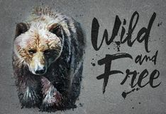 Bear watercolor painting with background, predator animals wildlife, wild and free wildlife print for t-shirt. Bear animals watercolor, wild cat, predator in royalty free stock photo