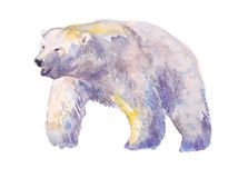 Bear, watercolor, sketch, paint, animals, illustration Royalty Free Stock Photography