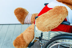 Bear and wheelchair. The wounded bear sitting in a wheelchair Royalty Free Stock Image