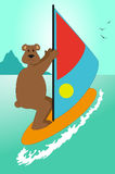 Bear on windsurfing Royalty Free Stock Photos