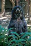 Bear in zoo stock image