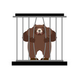 Bear in Zoo cage. Strong Scary wild animal in captivity. Large g Stock Image