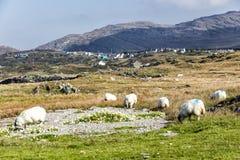 Beara får i den Eyeries byn Royaltyfri Foto