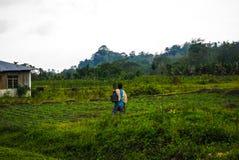 Bearbeiten des Feldes außerhalb ihres Hauses, Flores, Indonesien Stockbild