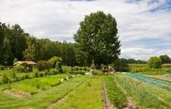 Bearbeitung im Garten. Stockfotografie