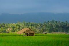 Bearbeitung im Thailand-Land Ackerland Stockfotos