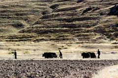 Bearbeitung in Tibet Lizenzfreies Stockfoto