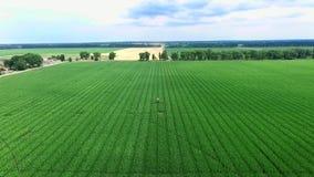 Bearbeitung von Mais, Maisplantage mit den saftigen, grünen, jungen Maistrieb Auf dem Feld ein spezieller Traktor für Mais stock footage